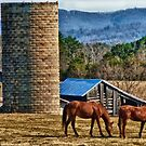 Virginia Horse Farm by Anthony M. Davis