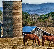 Virginia Horse Farm by Anthony M. Davis