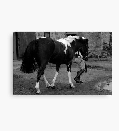 Out of the Stable Canvas Print
