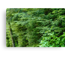 Reaching from the Forest Canvas Print