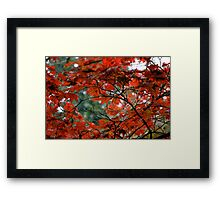 Red Leaves on a Fall Morning Framed Print
