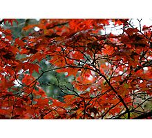 Red Leaves on a Fall Morning Photographic Print