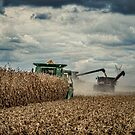 Harvest   by Steve Baird