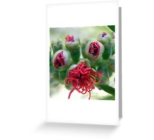 Blooming Bottle Brush Greeting Card