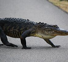 Gator Crossing by Cynthia48