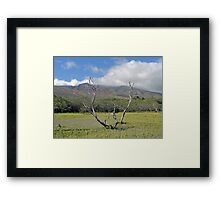 Molokai Surrealism  Framed Print