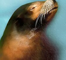 Portrait Of A Seal by Katy Breen
