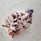 Seashell on Sand by Markku Vitikainen
