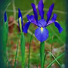 Japanese Iris Textures by Kathy Baccari