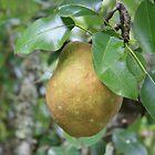 Bosc Pear study 1 by Linda Costello Hinchey