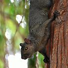Feeling Abit Squirrely by Lisa Baumeler