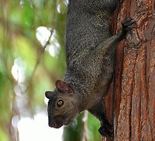 Feeling Abit Squirrely by Lisa Baumeler