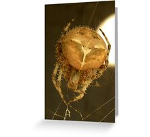Spider..... Greeting Card