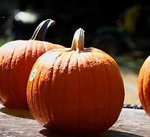 Punkin!!! by Linda Costello Hinchey