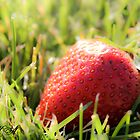 Berry  by addipaddi