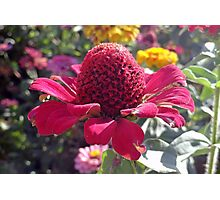 Red Cone Flower Photographic Print