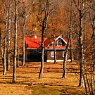Secluded Red Roof Cottage in the Woods - Fall Autumn Time w/ Orange Leaf Trees by Chantal PhotoPix