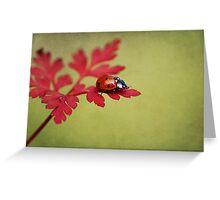 Ladybird in autumn Greeting Card