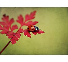 Ladybird in autumn Photographic Print