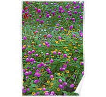 Wildflowers -- American Rose Garden Poster