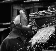 Racing Pigeon release @ Carlisle by Greig  Cowie