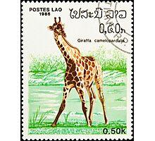 Giraffe stamp. Photographic Print