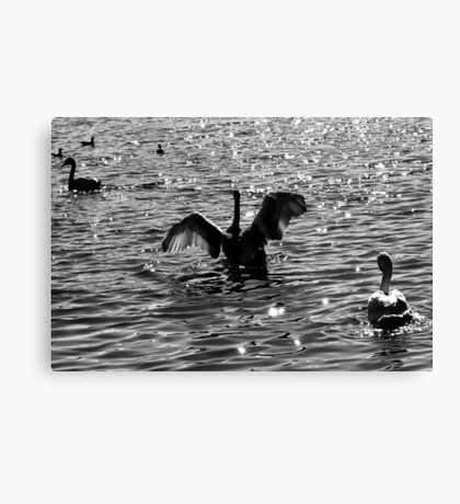 Testing His Wings Canvas Print