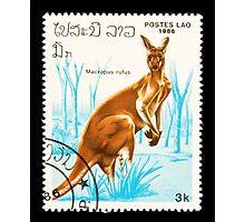 Kangaroo stamp. Photographic Print