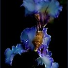 Magical Iris by Gerda Grice