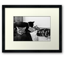 So This Is `Three`s a Crowd`!!! Framed Print