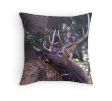 Elk Twisting Stare Throw Pillow