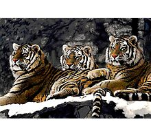 Three kings Photographic Print