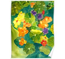 Nasturtiums I Have Known and Loved Poster