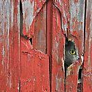 Peeping Tom by Maria Dryfhout