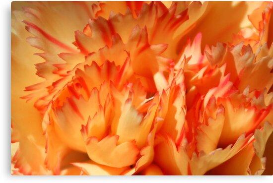 Hot Carnation by AuntDot