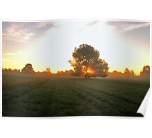 Mowed Field at Dawn Poster