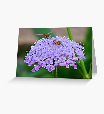 The Little Visitors, Greeting Card