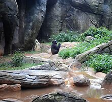 Gorilla by lroof