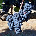Purple Grapes by Michael L. Colwell