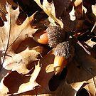 Acorns N Leaves by LadyEloise