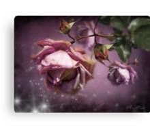 Dusky Pink Roses Canvas Print