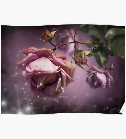 Dusky Pink Roses Poster
