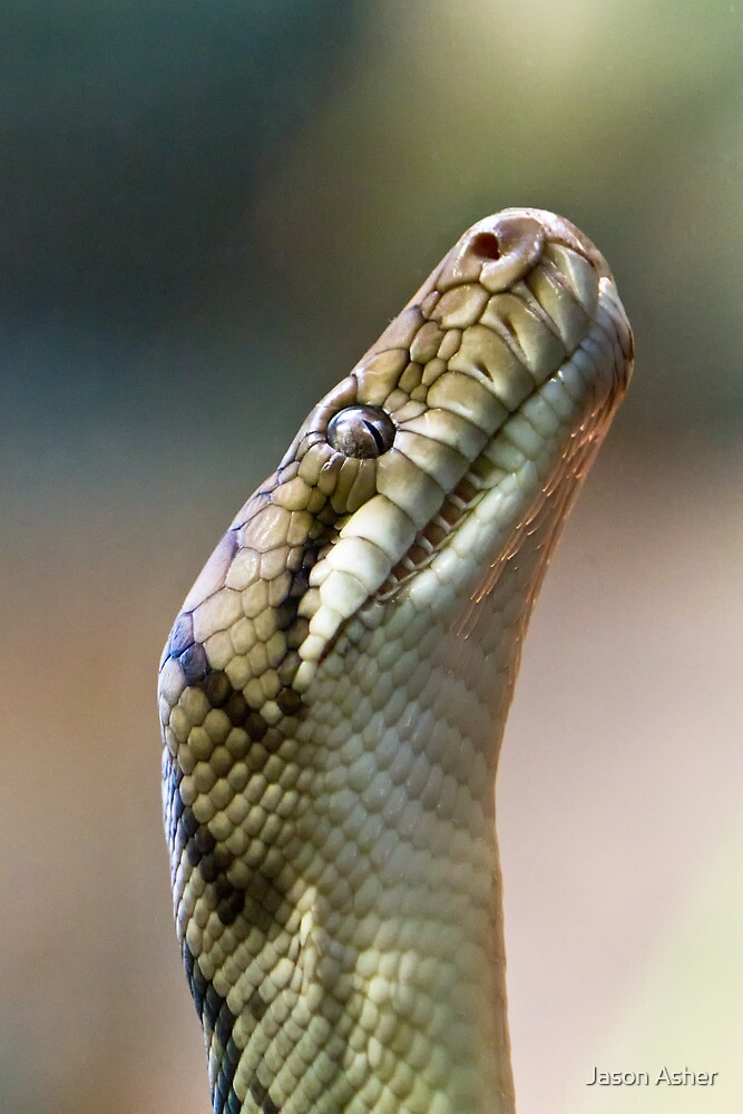 Python by Jason Asher