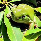Green on Green by Nicki Baker
