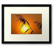Catch the sun Framed Print