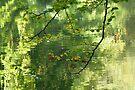 Hints of autumn by Photos - Pauline Wherrell
