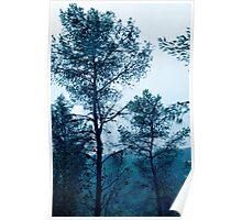 Pinetree Blues Poster