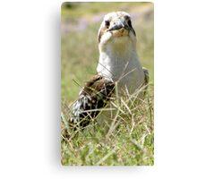 Kookaburra in the Grass Canvas Print
