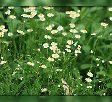Daisy Patch by chloemay