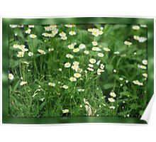 Daisy Patch Poster